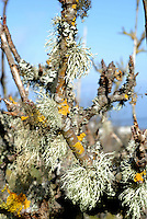 Lichen, Moss and Wood