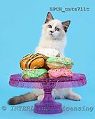Xavier, ANIMALS, cats, photos, SPCHCATS711C,#A# Katzen, gatos