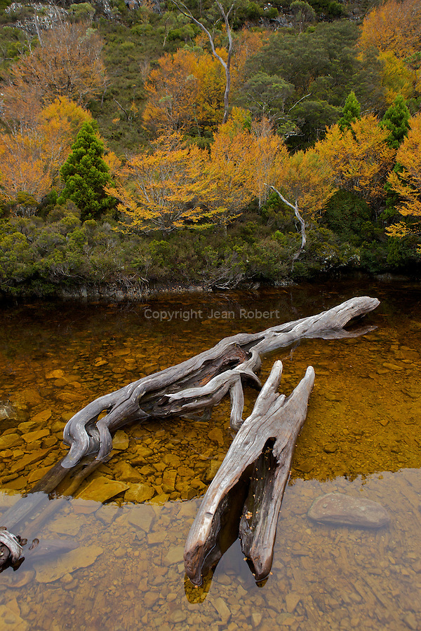 Cradle valley at the north part of the Overland track.Autumn colors of the eciduous beech or fagus  nearby  Crater lake make Easter a popular time on the track....Crater lake entouré d'hetres rouges et ors (deciduous beech ou fagus arbre endemique a la Tasmanie).