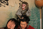 """October 22, 2016, Utsunomiya, Japan - A Japanese macaque Fuku (meaning happiness) plays with guests at an izakaya, Japanese pub """"Kayabuki"""" in Utsunomiya, 100km north of Tokyo on Saturday, October 22, 2016. The pub master Kaoru Otsuka trains Japanese macaques to help him and show their entertainment skills to attract customers including lots of foreign tourists.   (Photo by Yoshio Tsunoda/AFLO) LWX -ytd-"""