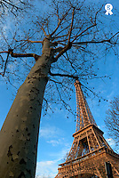 Tree in winter with Eiffel Tower at dusk, Paris, France (Licence this image exclusively with Getty: http://www.gettyimages.com/detail/81867336 )