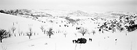 ROMANIA / Maramures / Valeni / February 2003..In a wintry scene out of a Bruegel painting, peasants haul a haystack with a horse drawn sleigh amid rolling hills of plum and apple trees...© Davin Ellicson / Anzenberger..