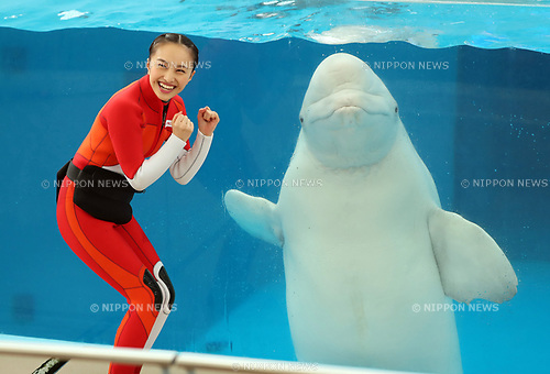 "April 26, 2017, Yokohama, Japan - Kanako Momota, a member of Japanese girls only pop group ""Momoiro Clover Z"" (MCZ) performs with a white beluga at the aquarium of the Hakkeijima Sea Paradise in Yokohama, suburban Tokyo on Wednesday, April 26, 2017. The aquarium will start the new attraction with sea aninals featuring a MCZ's TV program for children from April 28.   (Photo by Yoshio Tsunoda/AFLO) LwX -ytd-"
