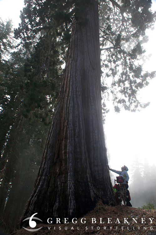 gMack takes some time away from his bicycle to give some love to some of the largest trees in the world (Giant Sequoia) - Sequoia National Park - Adventure Cycling Sierra Cascades Route - Canada to Mexico Cycling Expedition
