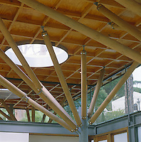 A detail of the steel, glass and timber structure of the building with roof supports resembling trees