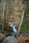 Montana, Western, Whitefish. A mountain stream cascades through moss covered rocks and autumn foliage.