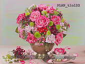 Marek, FLOWERS, BLUMEN, FLORES, photos+++++,PLMPTLO122,#f#