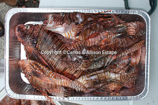 2014 Lionfish Derby, Florida Keys