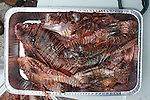 2014 Lionfish Derby, Florida Keys