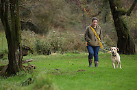 FAO JANET TOMLINSON, DAILY MAIL PICTURE DESK<br />Pictured: A dog is taken for a walk Wednesday 23 November 2016<br />Re: The Dog House in the village of Talog, Carmarthenshire, Wales, UK