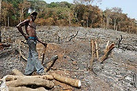 SIERRA LEONE, Kent, illegal logging of rainforest at Western Area Peninsula Forest / SIERRA LEONE Western Area Peninsula Forest  , illegale Abholzung von Regenwald fuer Feuerholz Bauholz Plantagen sowie Bauland und Bodenspekulation