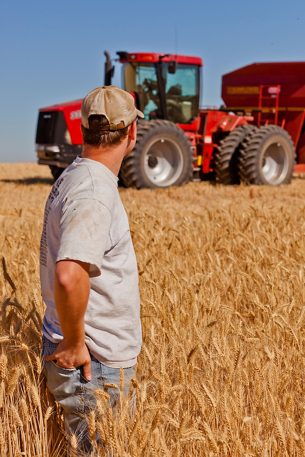 A farmer stands in his unharvested wheat field with the Case 335 tractor pulling a Sunflower grain hauler in the background.