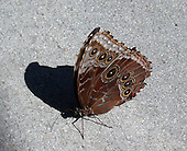 The shadow of a Butterfly.