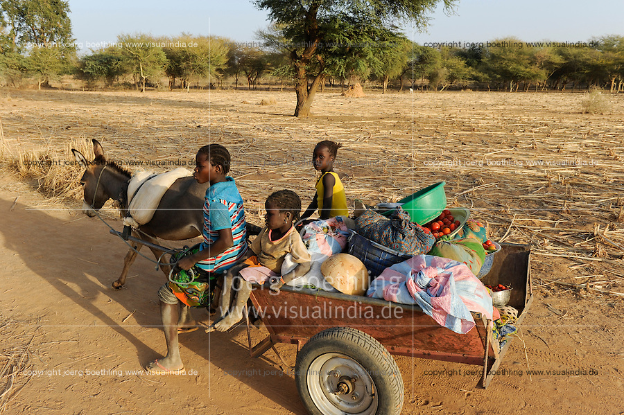 BURKINA FASO Kaya, children transport vegetables with donkey cart from farm to market    <br /> BURKINA FASO Kaya, Kinder transportieren mit einem Eselkarren Gemuese vom Feld zum Markt