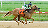 Leave It Up to Me winning at Delaware Park on 9/5/12
