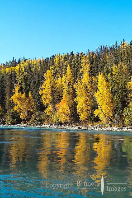 Fall colors are reflected in the green water of the Kenai River canyon.