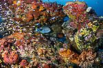 Beautiful Reef3