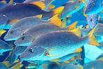 Bahamian Fauna