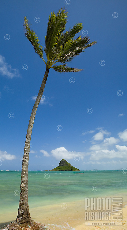 Palm lined beach with Chinaman's Hat, Kualoa Regional Park, East Side of Oahu