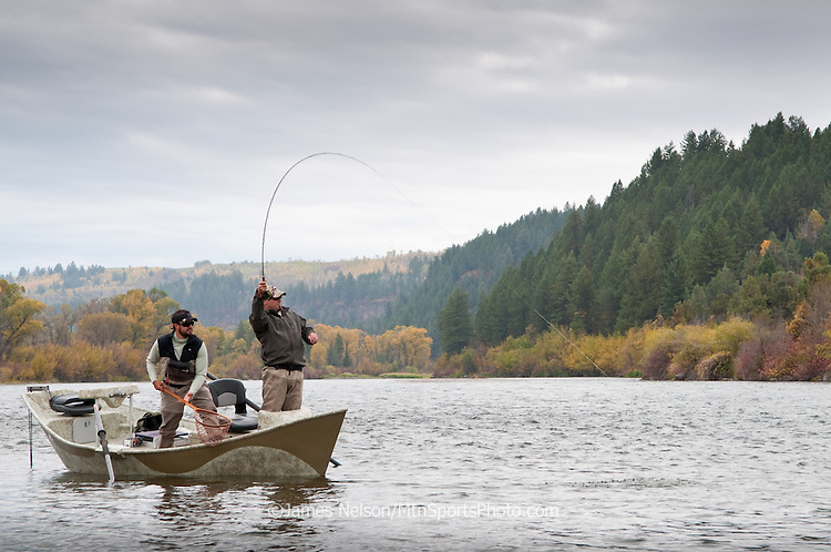 A fly fisherman brings a cutthroat trout to the drift boat during an autumn day on the South Fork of the Snake River, Idaho.