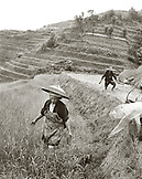 CHINA, Longsheng, farmers working the Dragon Backbone Rice Terraces (B&W)