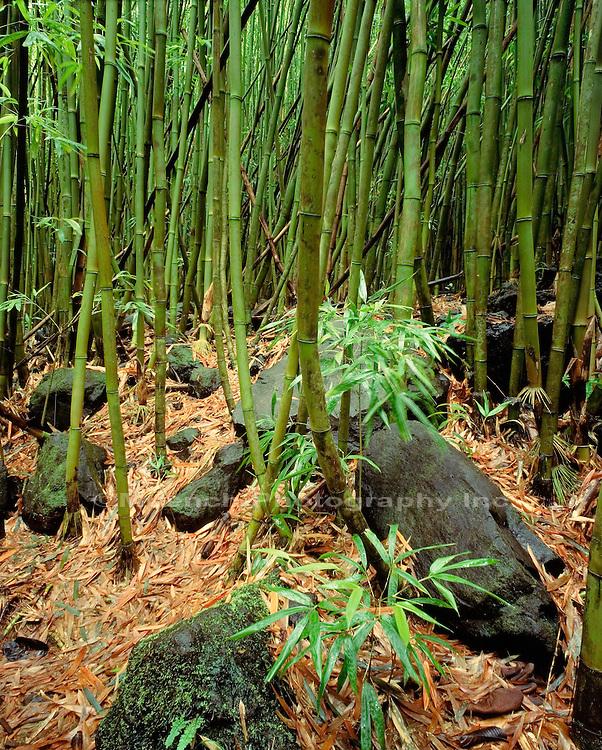 """""""Pipiwai Stream, Maui, Haleakala National Park"""