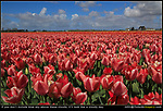 Netherlands, Keukenhof Gardens. Scary Close.<br />
