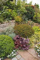 Heuchera, Violas, Acorus, conifers, patio, stone wall, shaded garden