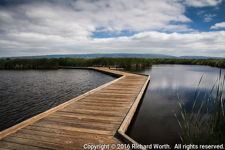 A floating wooden pathway, thanks to recent rains, allows access into the wetlands at Coyote HIlls Regional Park, Fremont, California.