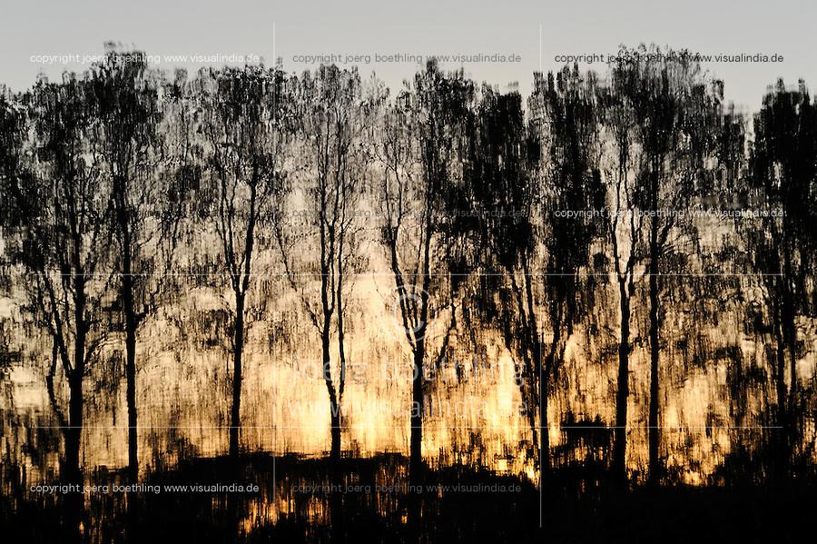 GERMANY Plau, trees reflected on water surface of lake / DEUTSCHLAND Plau, Baeume spiegeln sich im Wasser eines kleinen Sees