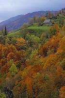 Europe/France/Auvergne/15/Cantal/Env de Thiezac: Le val de Cère