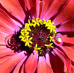 Botanical Intensity