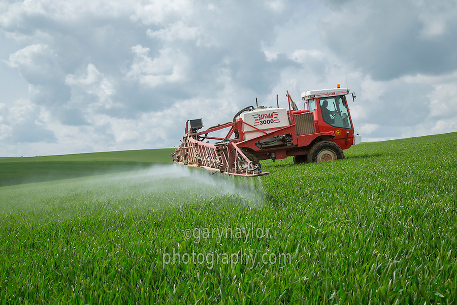 Spraying winter wheat with fungicide - Lincolnshire Wolds, May