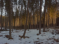 FOREST_LOCATION_90034