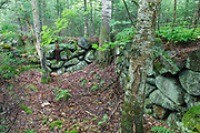 Unidentified cellar hole, near the start of the Guinea Pond Trail, in Sandwich Notch, New Hampshire. During the early nineteenth century, Sandwich Notch was home to a hill farm community consisting of thirty to forty families. Today, cellar holes remind us of their existence.