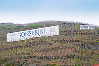 Terraced vineyards in the Cote Rotie district around Ampuis in northern Rhone planted with the Syrah grape. A sign saying Grand Vin Bonserine (one of the producers now owned by Guigal) Cote Brune and Chambeyron  Ampuis, Cote Rotie, Rhone, France, Europe