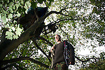 Gaz, one of a group of campaigners and residents of the Nine Ladies protest camp at Stanton Lees, near Matlock in the Derbyshire Dales .pictured beneath his tree houses. The ancient woodland and Nine Ladies stone circle were threatened by a proposed quarry near the site. Following a nine year campaign by protesters the quarry proposal has now been rejected, and the camp will soon be dismantled and vacated.