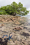 Dream Island, Munda, Solomon Islands; small island with trees and mangroves, surrounded by shallow coral reefs. The island is getting smaller due to rising water levels with global warming.