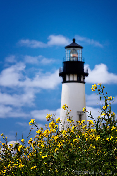 Yaquina Head lighthouse with yellow flowers