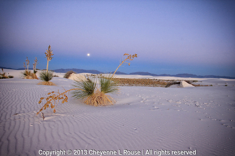 Yucca Full Moon - White Sands, New Mexico
