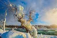 Iced snag at Niagara Falls in winter, Niagara Falls State Park, New York, American Falls
