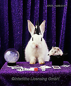 ANIMALS, REALISTISCHE TIERE, ANIMALES REALISTICOS, photos+++++,SPCHRABBIT92,#a#, EVERYDAY ,rabiit,rabbits,