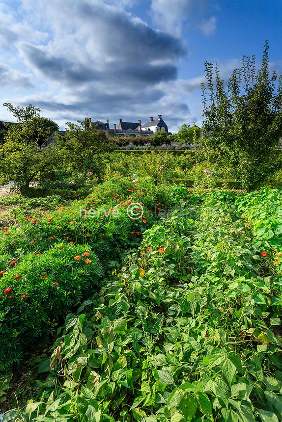 France, Sarthe (72), Le Lude, château et jardins du Lude, le potager, haricots nains et tagètes