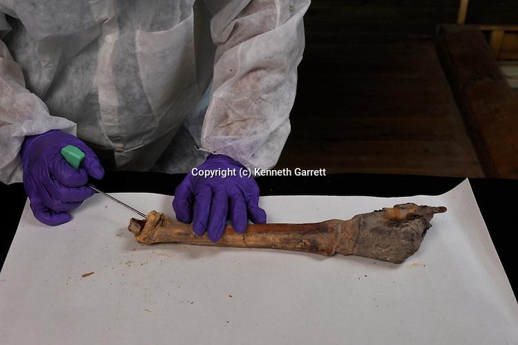 mm7864, King Tut, Tut, Tutankhamun, DNA,  sample,. The Egyptian Museum, Cairo, New Kingdom, Egypt, 18th Dynasty, mummy