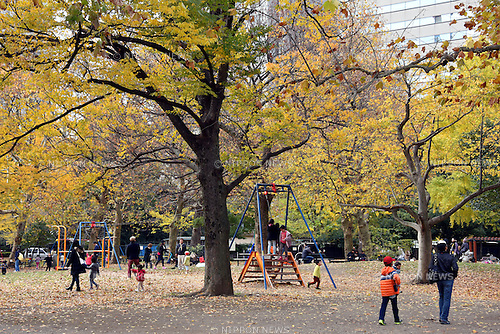 December 6, 2015, Tokyo, Japan - Leaves are turning yellow and red at Tokyos Hibiya Park as seasons change from late autumn to early winter on Sunday, December 6, 2015. (Photo by Natsuki Sakai/AFLO) AYF -mis-