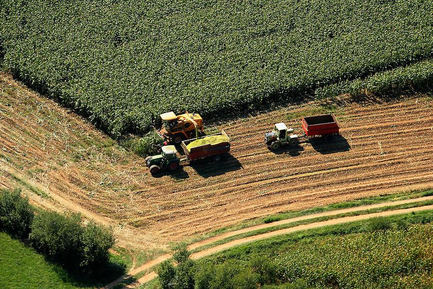 Recolte du mais dans la vallee du Cele..Collect corn in the valley of Cele