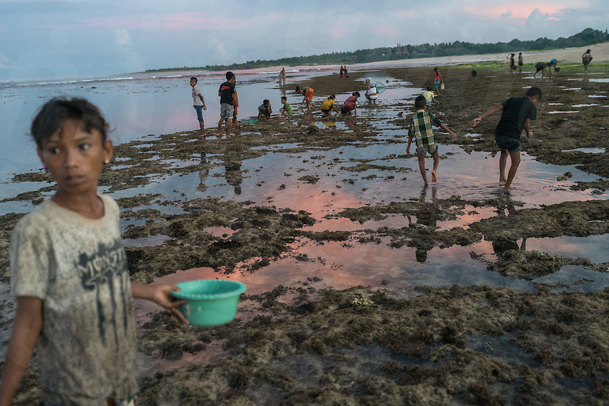 """March 29, 2016 - Wainyapu (Indonesia). Before dusk villagers flock into the near beach in order to  collect the """"Nyale"""", multicolored sea worms, which appear only once each year and that are used for the opening ceremony of the Pasola. © Thomas Cristofoletti / Ruom"""