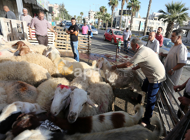 Muslims sacrifice animals in a slaughterhouse, on the first day of the Muslim holiday of Eid al-Adha or the feast of sacrifice, in the West Bank City of Ramallah on September 24, 2015. Muslims across the world are celebrating the annual festival of Eid al-Adha, or the Festival of Sacrifice, which marks the end of the Hajj pilgrimage to Mecca and in commemoration of Prophet Abraham's readiness to sacrifice his son to show obedience to God. Photo by Shadi Hatem