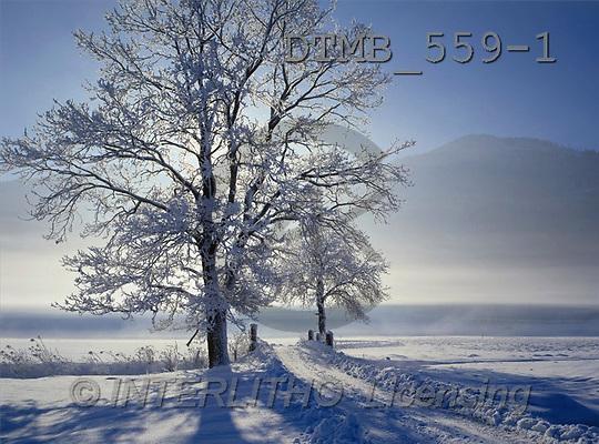 Gerhard, CHRISTMAS LANDSCAPE, photos, Bayern.Rauhreifb?ume im Gegenlicht(DTMB559-1,#XL#) Landschaften, Weihnachten, paisajes, Navidad