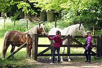 Horse at Arnhem in Netherlands